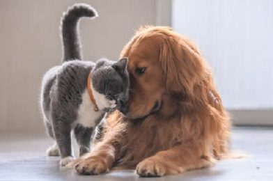 How To Make A Cat and Dog Become Friend