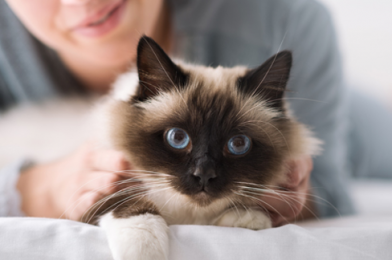 How To Choose The Right Pet