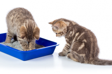 6 Steps Training Cats to Use the Litter Box