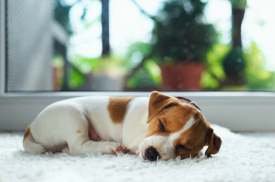 How Much Dogs Sleep A Day?