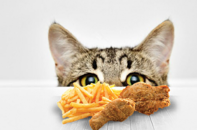 Human Food Safe For Cats