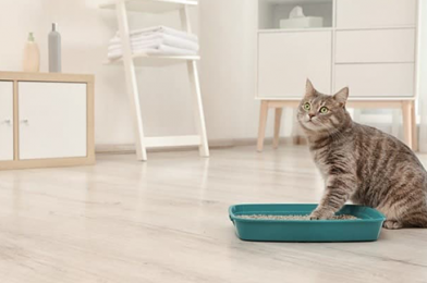 Choose The Right Cat Litter