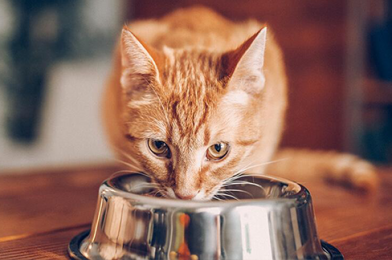 How Much Chocolate Is Toxic to Cats?