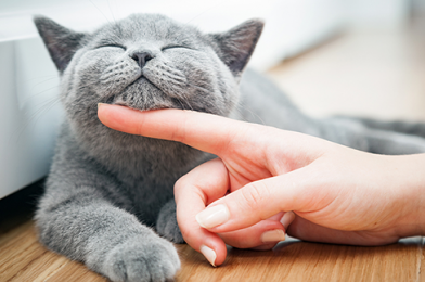 What to Do If Your Cat Is Constipated