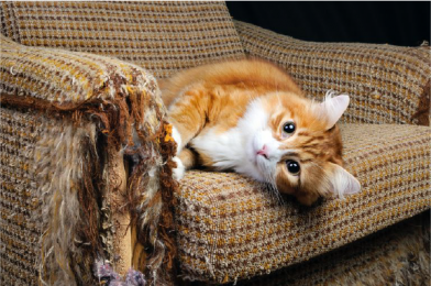 How Do I Stop My Cat Scratching Furniture?