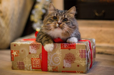 10 Holiday Gifts for Cats