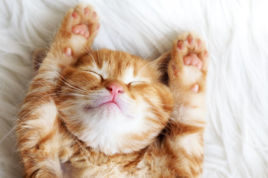 How To Clip Your Cat's Claws