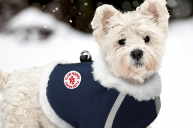 Appropriate Clothes For Dogs In The Winter