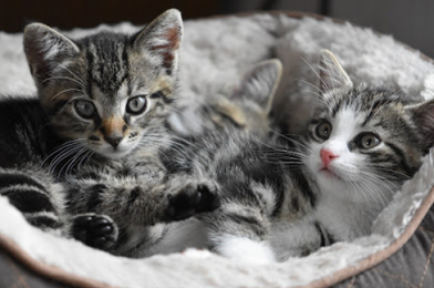 Make Your Home Be Friendly With Cat